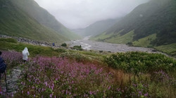 Valley of flowers 7