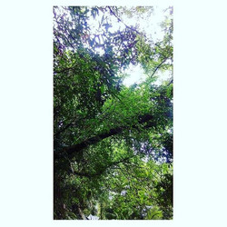 When you want Nature to be your best friend - Lying under the shade of tree leaves , enjoying wind a