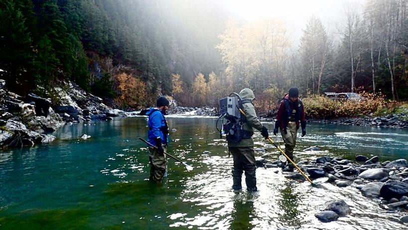 Juvenile Chinook Monitoring