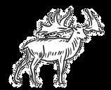 Hirsch neu