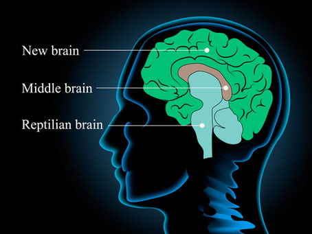 The Brain and Addiction - Part I