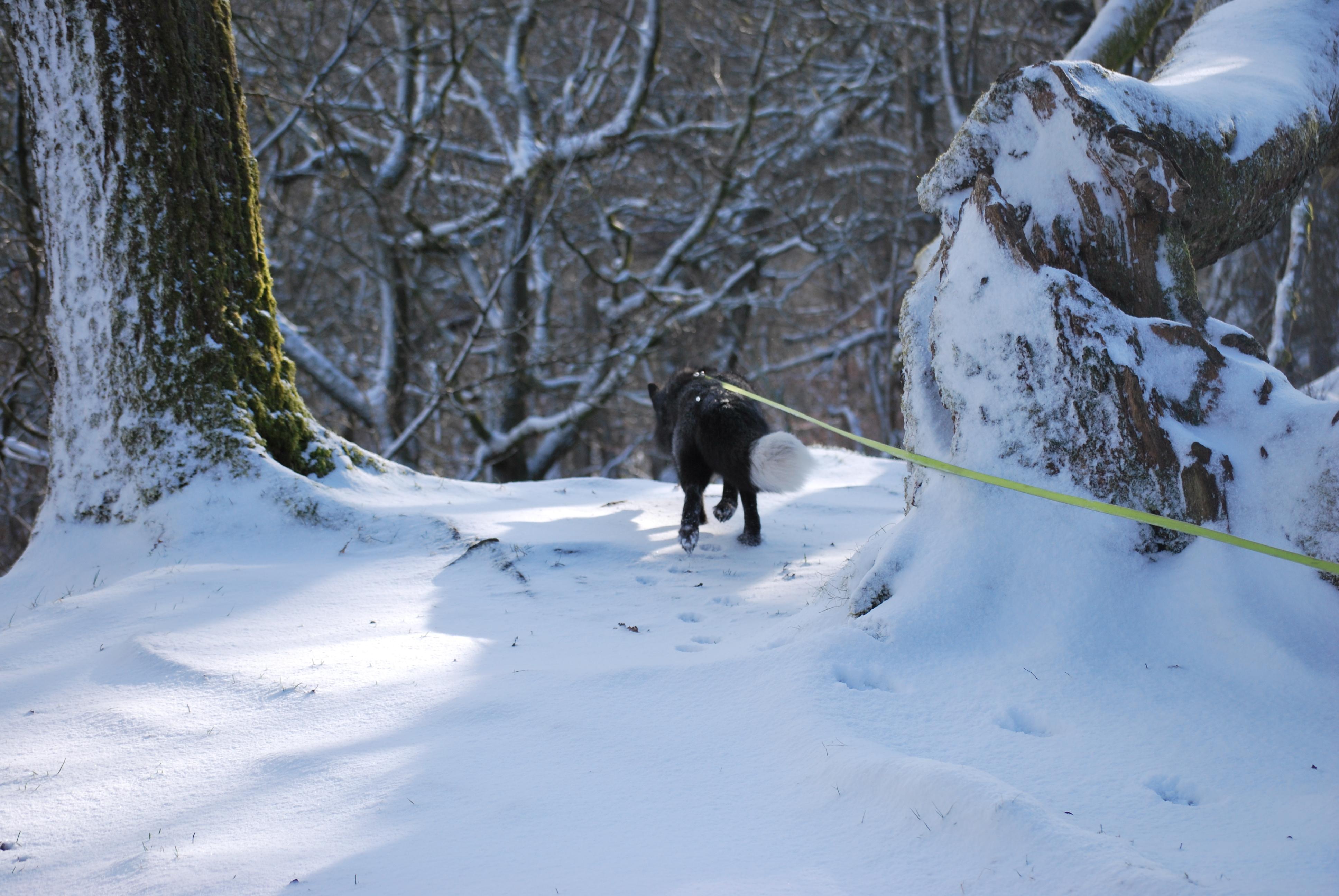 More winter walks for Vincy