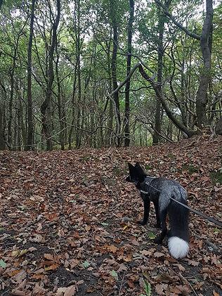 Vince walking in woods