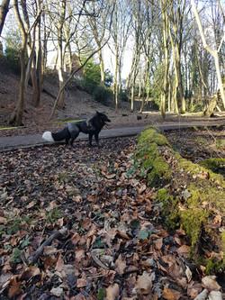 Exploring Graves park