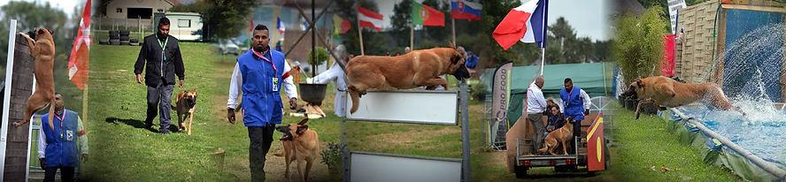 banniere_cms_sports_canins.jpg