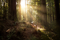 Sequoia Park-JF (6) 1800
