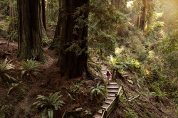 Sequoia JF3