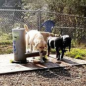 Tricia-dogpark photo.jpg