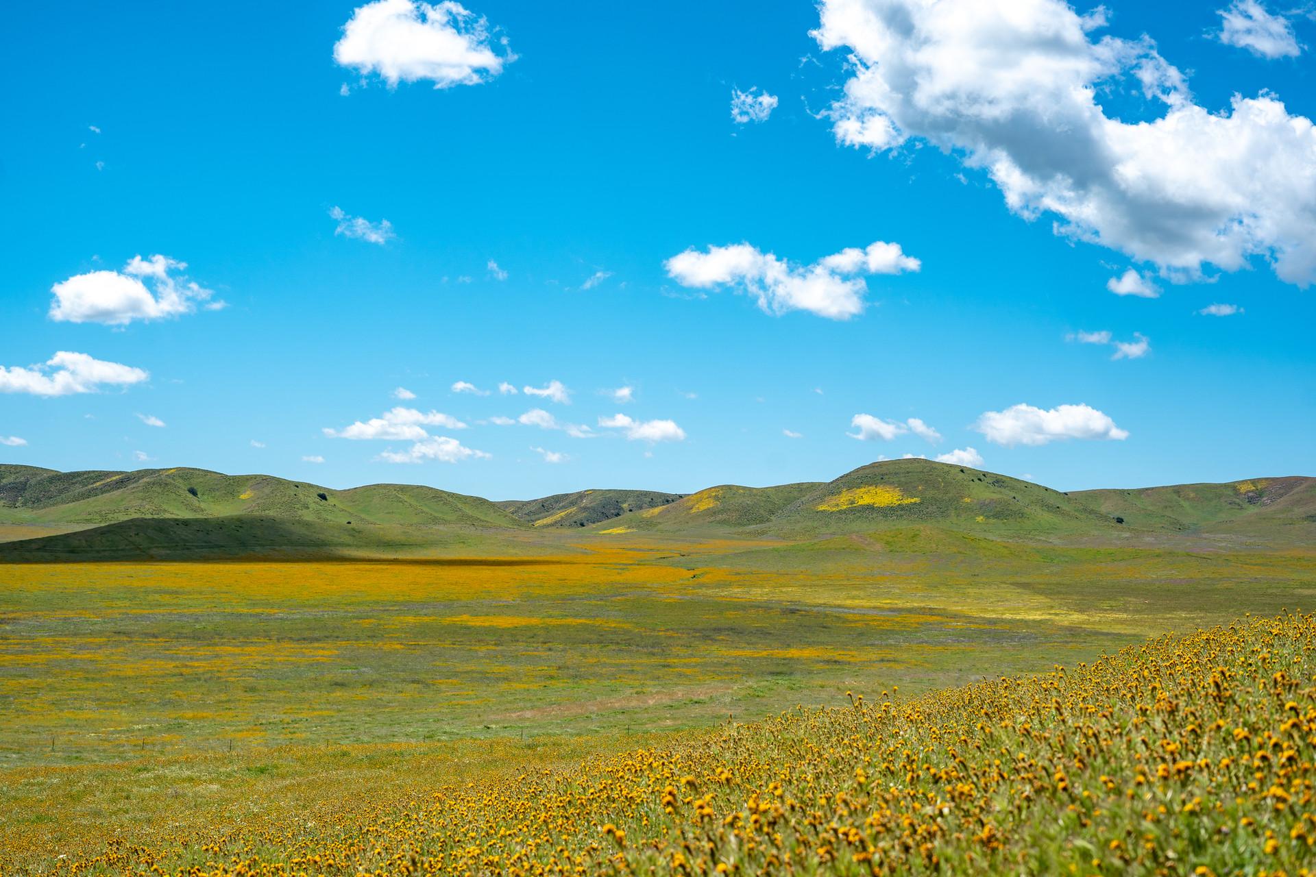 Sunny Landscape 2