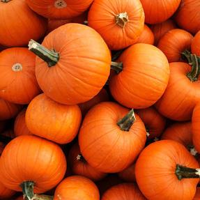 pumpkins-1529604270.jpg