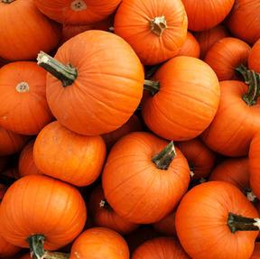 The Great Pumpkin 5K