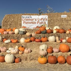 Crismor's U Pick Pumpkin Patch