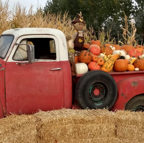 Magic Valley Corn Maze & Haunted Forest