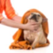 Flea Treatment | Just 4 Dogs Pet Salon