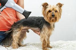 Mini Groom by Just 4 Dogs Pet Salon