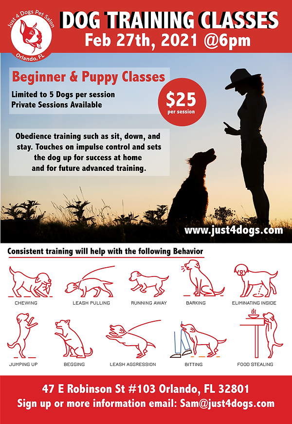 Feb 27th dt Dog Training Poster-01.png