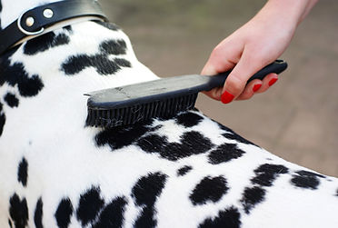 Shedding treatment for dogs | Just 4 Dogs Pet Salon