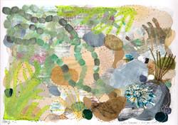 Sea Grapes & finger shell