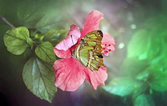 butterfly-4991477_1920.jpg