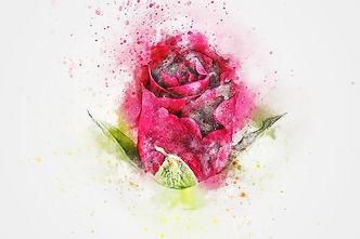 flower-2495215_1920.jpg