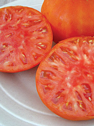 Brandywine Pink Tomato Plant - pre-order of plants for April delivery