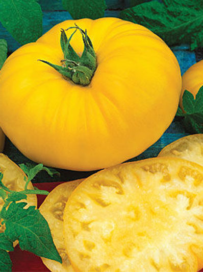 Brandywine Yellow Tomato Plant - pre-order of plants for April delivery