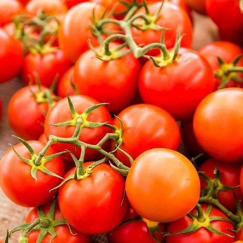 Red Sweetie Cherry Tomato Plant - - pre-order of plant for April delivery
