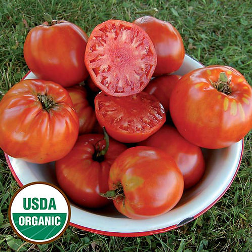 Italian Heirloom Tomato Plant - pre-order of plant for April delivery