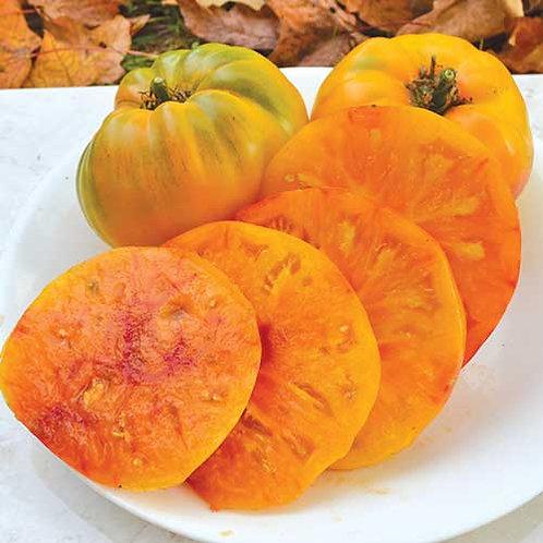 Hillbilly Potato Leaf Tomato Plant - pre-order of plants for April delivery