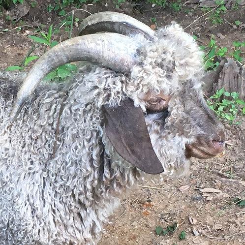 Angora Goat Mohair - grey 8oz