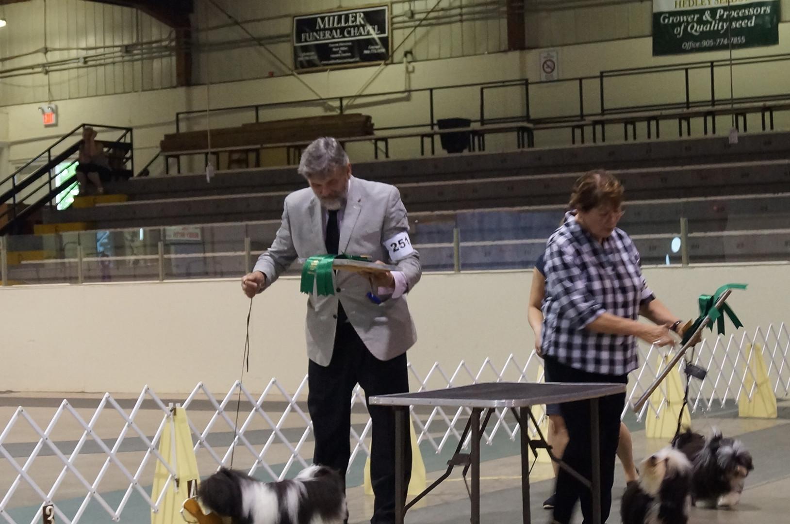 Puppy Sweeps winners