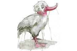 Tränenteichtiere – Ente
