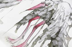 Tränenteichtiere – Marabu