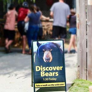 about-bears.jpg