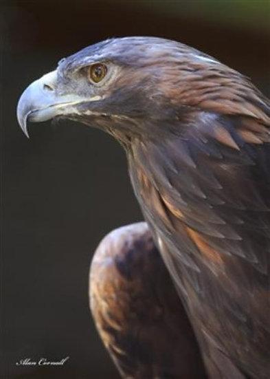 King Alfred (Golden Eagle)