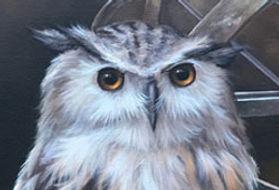 owl-eyes.jpg