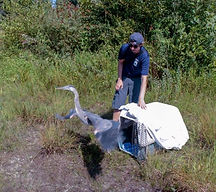 Matt & Blue Heron.jpg