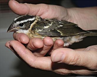 injured-bird.jpg