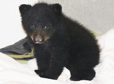 Baby-bear.jpg