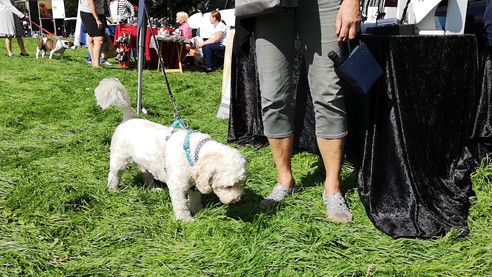 Waggiest tail competition