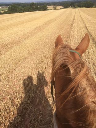 Stubble fields!!