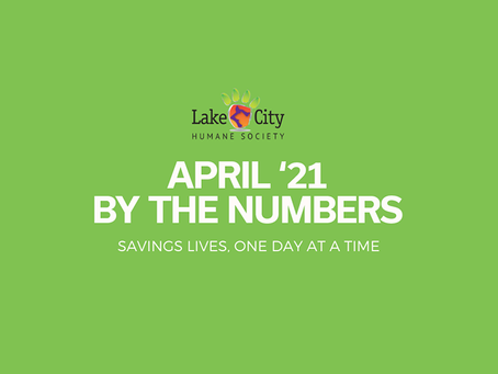 April '21 by the Numbers