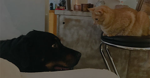 Animal Services - Pet Food & Litter Bank