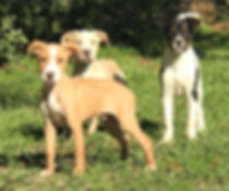 Adoption Page Dogs.jpg