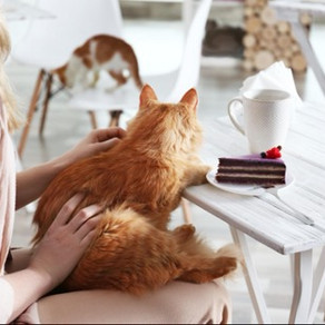 Why Cats Make Good Companions