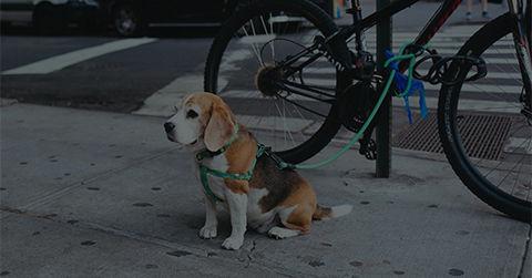 Animal Services - Ordinances.jpg