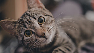 A La Carte Pricing Feline.jpg
