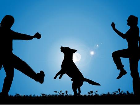Why Dogs Make Good Companions