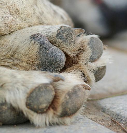 Deceased Animals Image.jpg