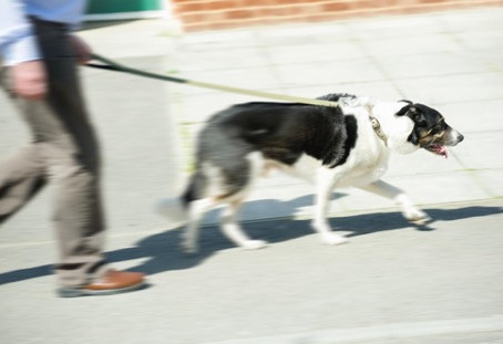 Is It OK for Your Dog to Lead You On Walks?